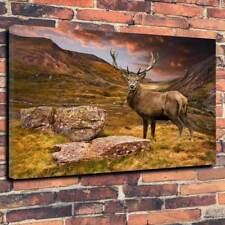 "Highland Stag Scotland Deer Printed Box Canvas Picture A1.30""x20""30mm Deep Frame"
