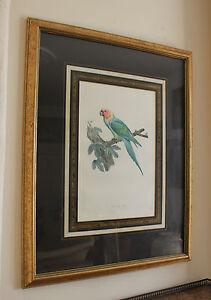 Vintage Parrot Portrait Decorative Print Le Petit Ara