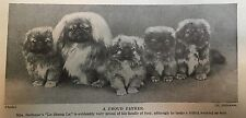 BABY PEKINGESE PUPPIES WITH THIER FATHER PUPPY  Peke 1934 Vintage PHOTO Print