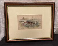 ANTIQUE 19th CENTURY ENGRAVING 1840 HAND COLOURED FISH SEBBANUS SCRIBA LIZARS SC