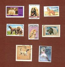 Afghan Hound dog postage stamps set of 8