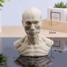 10 cm Human Model Anatomy Skull Head Muscle Bone Medical Artist Drawing School