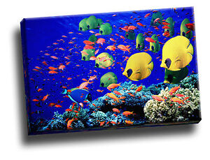 Life Below the Red Sea, Egypt Giclee Canvas Wall Art Picture