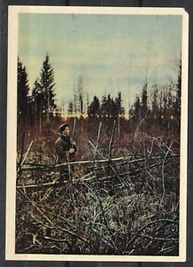 Soviet Russia 1958 mint postal card Hunter in forest