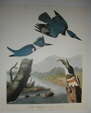 """Belted Kingsfisher""; from 'THE AUDUBON FOLIO' - quality 14""x17"" print/poster"