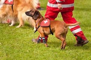 Sport Wrist Bandage / Sport Dog Front Leg Bandage / Dog Agility Wrist Bandage