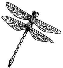Unmounted Rubber Stamps, Insects, Nature Stamps, Dragonflies, Dragonfly Stamps