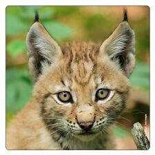 Réfrigérateur-magnétique: mignons, le lynx-BABY-Little Lynx