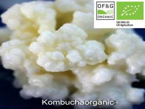 Organic Live RAW Milk Kefir Grains Tibetan Mushroom by Kombuchaorganic®