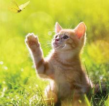 Mère'S Jour Carte Vierge-Pretty Ginger & Blanc Chaton Chat papillon Livraison gratuite!