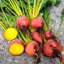Burpee's Golden Beets {30,100,200,400} Seeds Heirloom treated 55 days Bulk