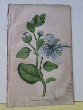 Vintage Print,COMMON CAPER BUSH,Ladies Wreath,1849-50