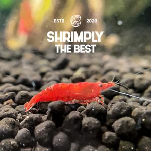 Live Freshwater Red Cherry Shrimp X 10