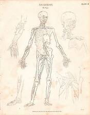 1803 DATED PRINT ANATOMY ~ MYOLOGY ~ DIAGRAM MUSCLES SKELETON FIGURE ARM LEG