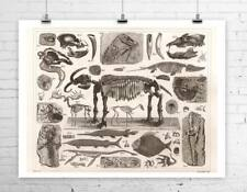 Dinosaur Fossils 1850 Antique Illustration Rolled Canvas Giclee Print 30x24 in.