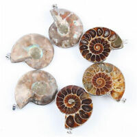 1pc Sea Nautilus Ammonite Fossil Shell Natural Pendant For Necklace Making Gift