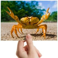 "Yellow Fighting Crab Sand - Small Photograph 6"" x 4"" Art Print Photo Gift #14621"