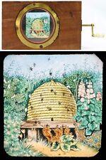 LA RUCHE   / lanterne magique magic lantern / 539