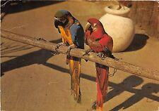 BF39997 zoo de mervent vendee les aras arra parrot perroquet france  bird oiseau