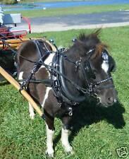 Ultimate mini miniature horse biothane parade harness