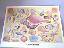 Florida Tropical Shells Collection Postcard Collectible Postcard 4 X 6