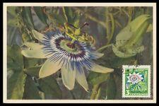 URUGUAY MK FLORA PASSIONSBLUME BLUE PASSIN VINE CARTE MAXIMUM CARD MC CM h0666