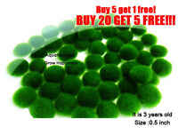 Nano Marimo Moss ball-monkey Live aquarium plant fish tank betta sea triops java