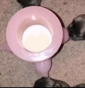 Silicone Puppy Feeding Station not for small breeds