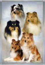 Shetland Sheepdog/Sheltie A6 Blank Card No10 Starprint