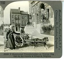 BELGIUM, Dog Cart in the Streets of Brussels--Keystone #T132^