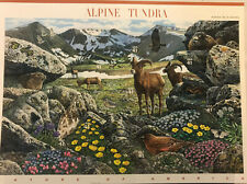 Alpine Tundra - Nature of America Number 9