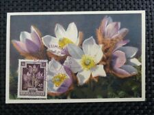 Austria MK 1948 Flora kuhschelle maximum carta carte MAXIMUM CARD MC cm a8557