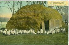 Wisconsin,  A 1912 Chicken Scratch in a Wisconsin Poultry Yard