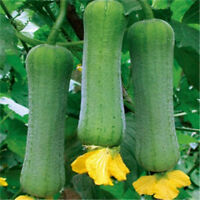 20pcs Luffa Cylindrica, Loofah Organic Seeds Sweet Vegetable For Garden Plants