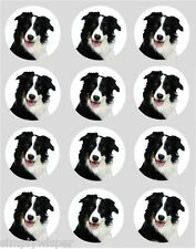 12 Border Collie Dog Cupcake Decoration Edible Cake Toppers Pre Cut 40mm
