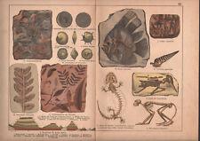 1878 lithographie originale fossiles poissons squelettes reptiles géologie