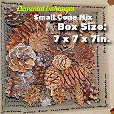 Pine Cones Mixed Conifers (8+ species) Nature Craft Forest ElementalExchanges