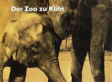 Chargesheimer Hässlin Der Zoologische Garten Köln 1960