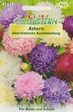 """50 Pfl. Astern Amerikanische Buschmischung einjährig Blumensame/""""Top Qualität/""""ca"""