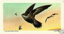 RED ROSE TEA CARD, SERIES: CANADIAN/AMERICAN SONGBIRDS, CHIMNEY SWIFT