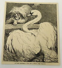 1882 magazine engraving ~ FIGHT BETWEEN A SWAN AND A DOG