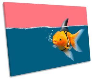Goldfish Shark Fin Bathroom Print SINGLE CANVAS WALL ART Picture Pink