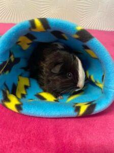 Guinea Pig / Hedgehog Snuggle Pouch / Snuggle Sack