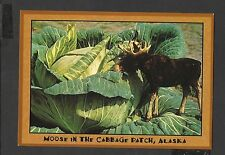 Alaska Joe Colour Postcard Moose in the Cabbage Patch Alaska unposted
