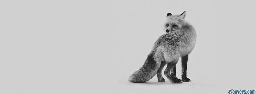 Innocent Fox 84