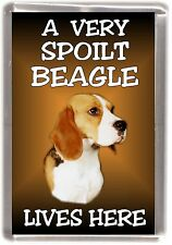 "Beagle Dog Fridge Magnet ""A VERY SPOILT BEAGLE LIVES HERE"" by Starprint"