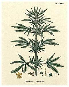 "Marijuanna Art Pot Leaf Vintage Rare Hot New Original 8x10"" B55"
