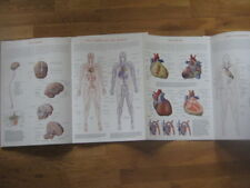 Wallchart of Human Anatomy: 3 D Full-Body Images,