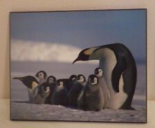 "Penguin with Babies Animal Photo Wall Hanging 8"" x 10"""