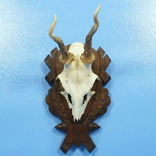 "11"" Antique German Black Forest Wood Carved MOUNTED ANTLER PLAQUE Hunt Stag Deer"